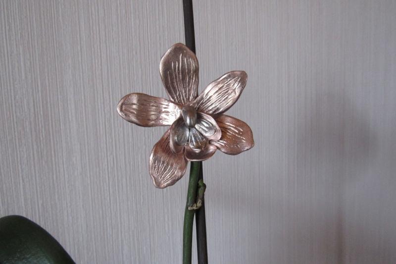 Concours du forum Météor : Les fleurs ! - Page 2 Img_0912