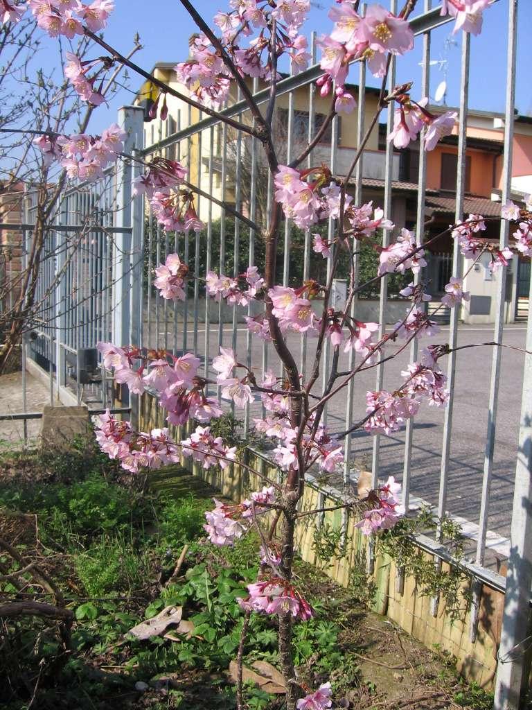 La nostra Primavera - Pagina 8 00911