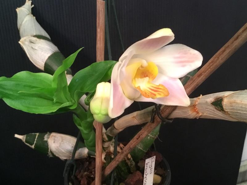 Floraison des orchidées de juin à........... Image43
