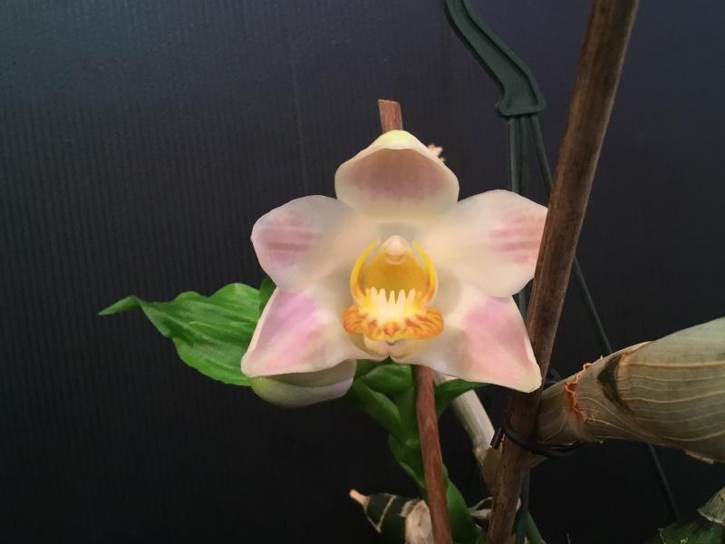 Floraison des orchidées de juin à........... Image44