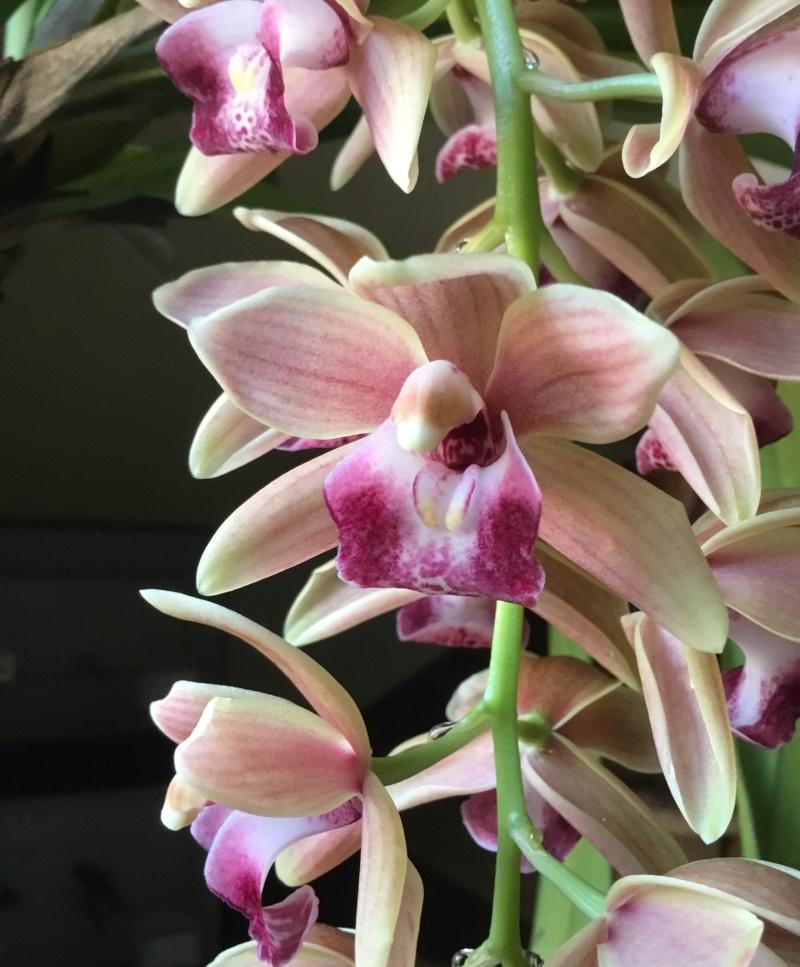 Floraison des orchidées de juin à........... Image48