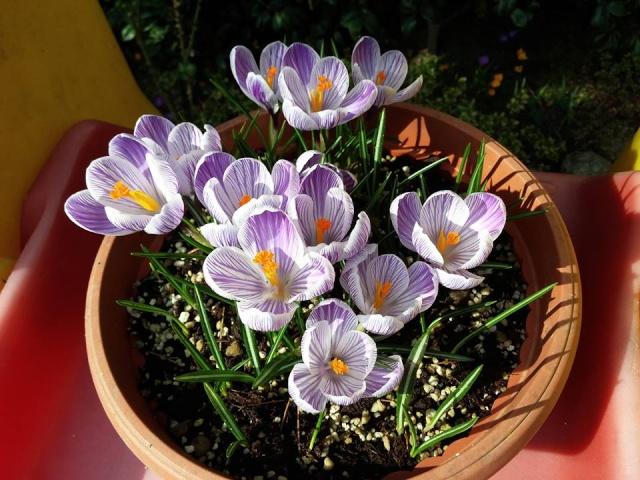 La nostra Primavera - Pagina 6 12718210