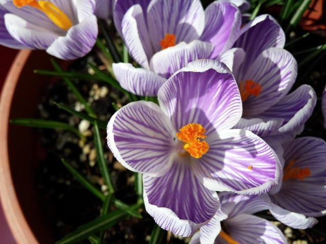 La nostra Primavera - Pagina 6 12745910