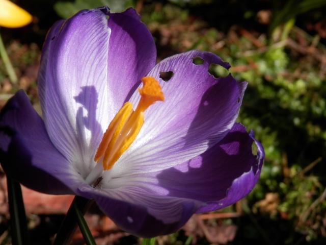 La nostra Primavera - Pagina 6 P2190011