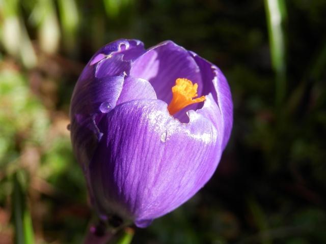 La nostra Primavera - Pagina 6 P2190012