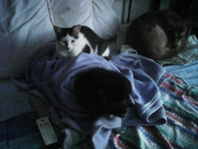 CELIA, Chatte, NOISETTE ET PRINCESSE ses 2 chatons (ORASTIE) En FA chez CHANTAL D.(Depart36) - Page 3 12705610