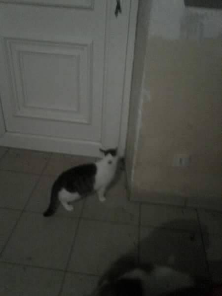 CELIA, Chatte, NOISETTE ET PRINCESSE ses 2 chatons (ORASTIE) En FA chez CHANTAL D.(Depart36) - Page 3 12736110