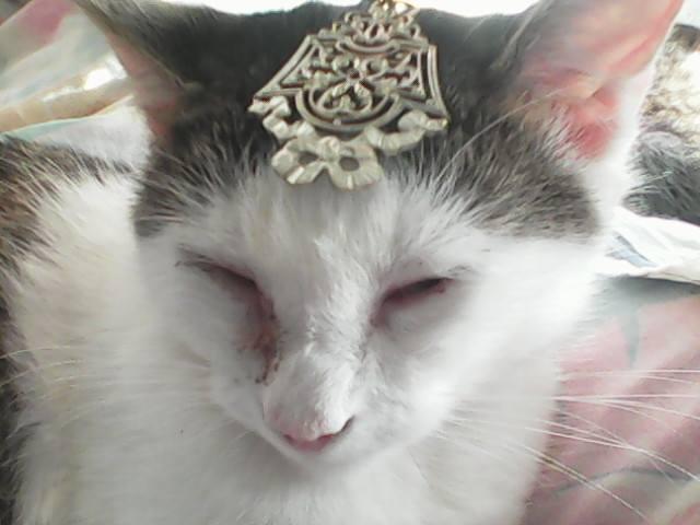 CELIA, Chatte, NOISETTE ET PRINCESSE ses 2 chatons (ORASTIE) En FA chez CHANTAL D.(Depart36) - Page 3 12736111