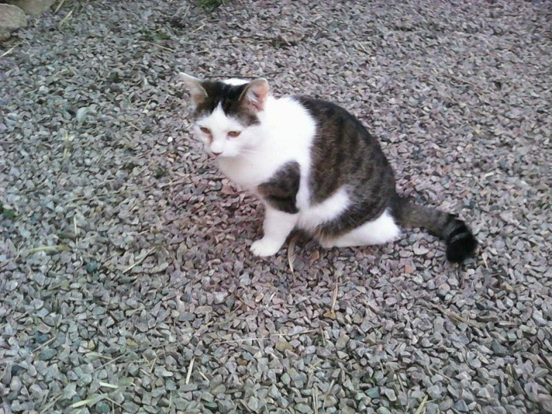 CELIA, Chatte, NOISETTE ET PRINCESSE ses 2 chatons (ORASTIE) En FA chez CHANTAL D.(Depart36) - Page 3 12746410