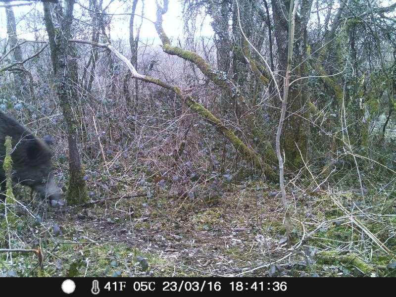Surveillance et analyse du territoire avec un APN auto 23_mar10