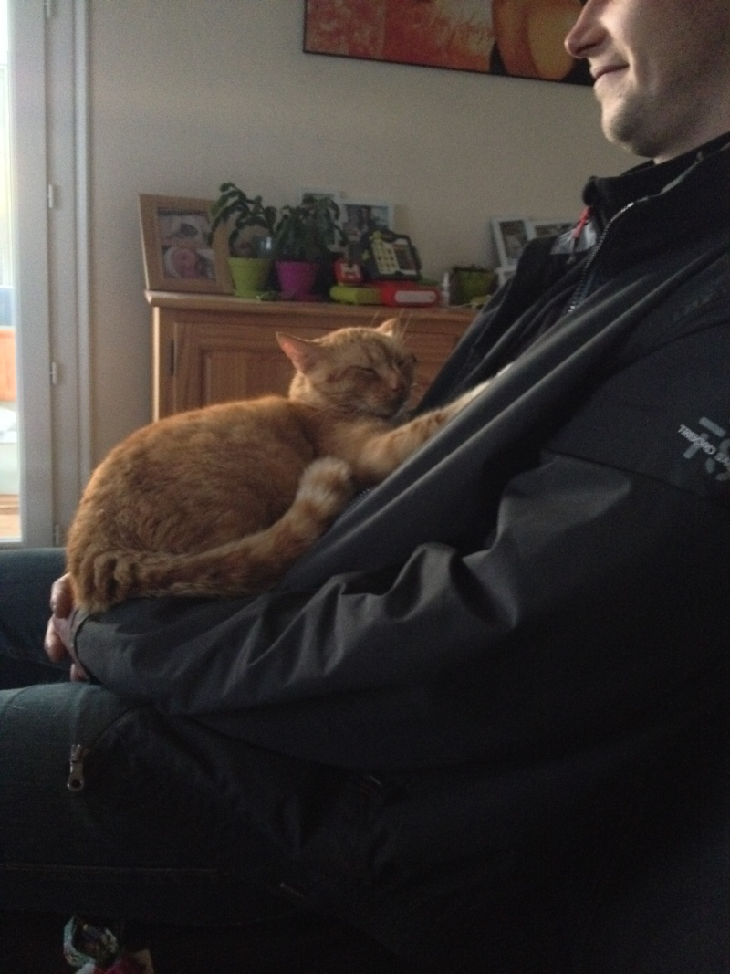 HUGO, chat européen roux, né le 01/05/2012, en sauvetage (frais d'adoption libres) Img_1010