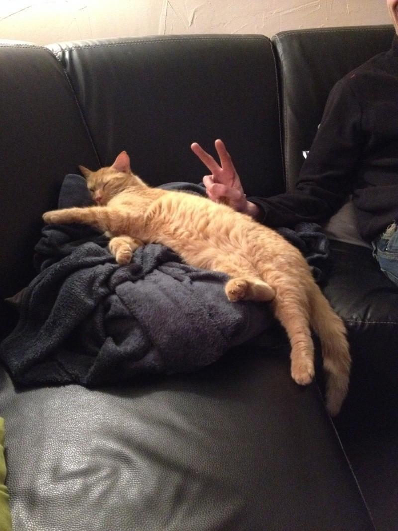 HUGO, chat européen roux, né le 01/05/2012, en sauvetage (frais d'adoption libres) Img_1013