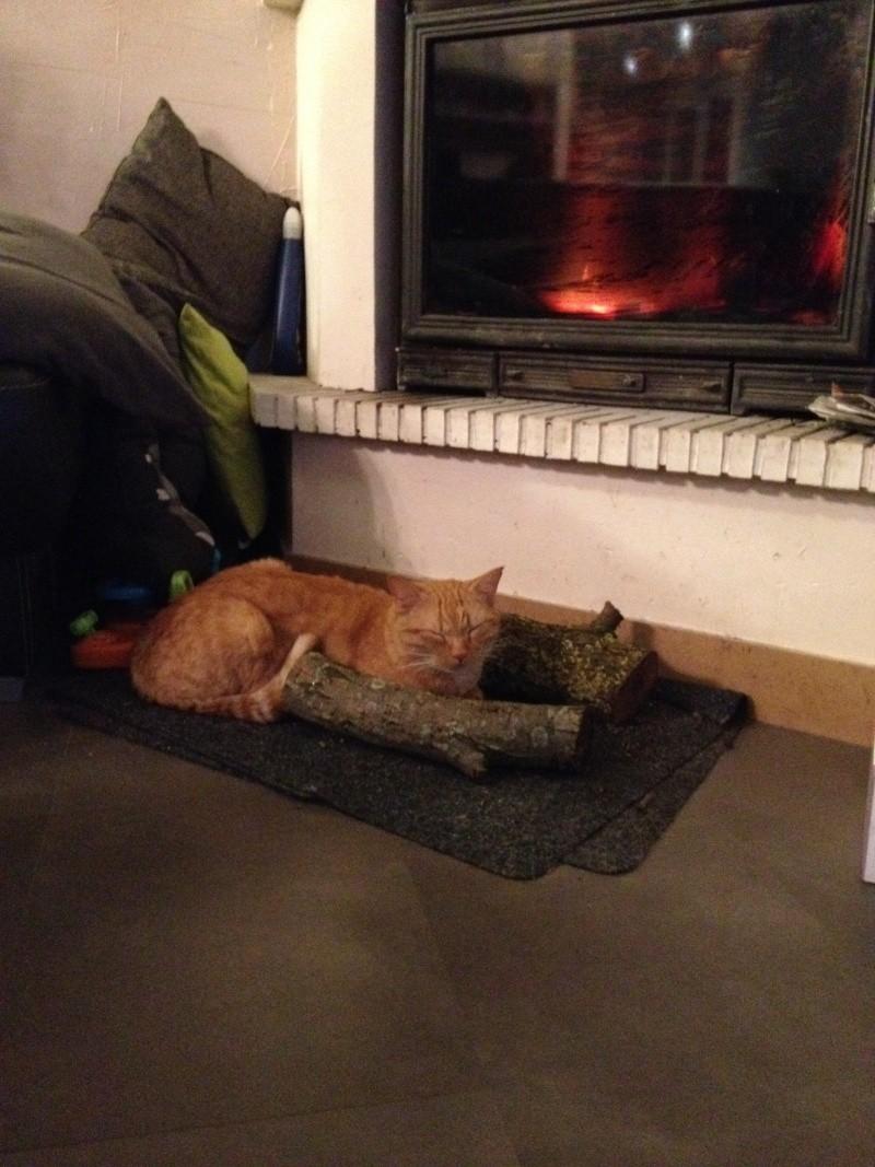 HUGO, chat européen roux, né le 01/05/2012, en sauvetage (frais d'adoption libres) Img_1014