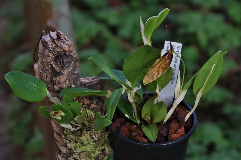 Miniatur-Orchideen Teil 3 - Seite 5 Img_0827