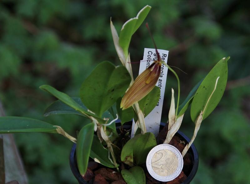 Miniatur-Orchideen Teil 3 - Seite 5 Img_0828