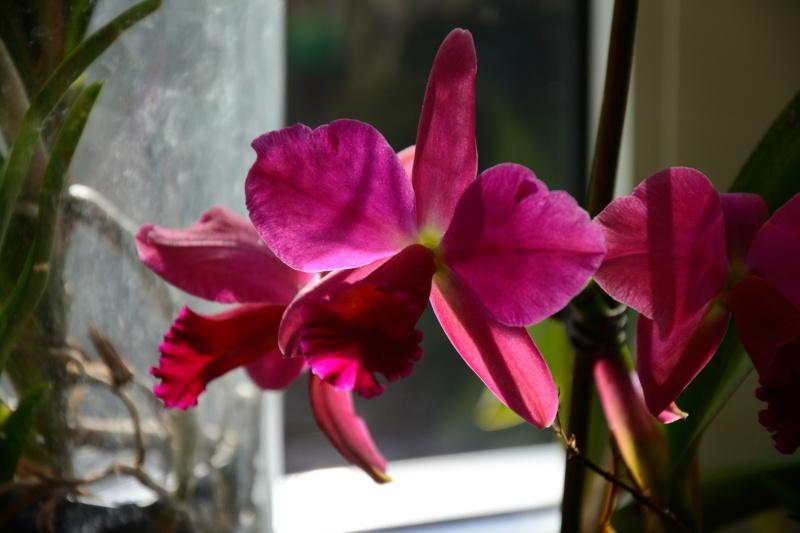 Welche Orchidee ist das? Dsc_7410