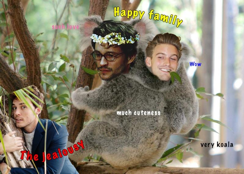 La galerie des horreurs. Koalas10