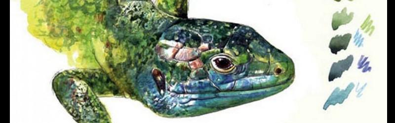 Reptiles et batraciens de Bretagne Sans_258