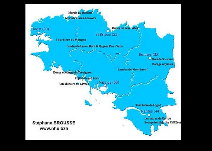 Reptiles et batraciens de Bretagne Sans_260