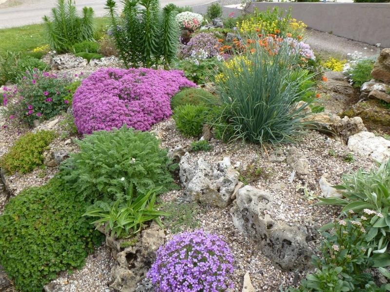 petit aperçu de mes rocailles P1020113