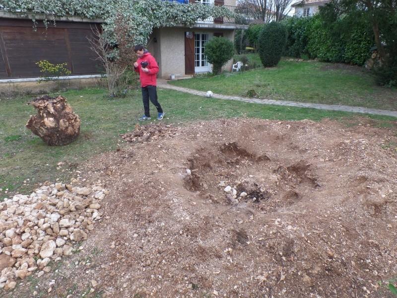 La family coupe des arbres Sam_7010