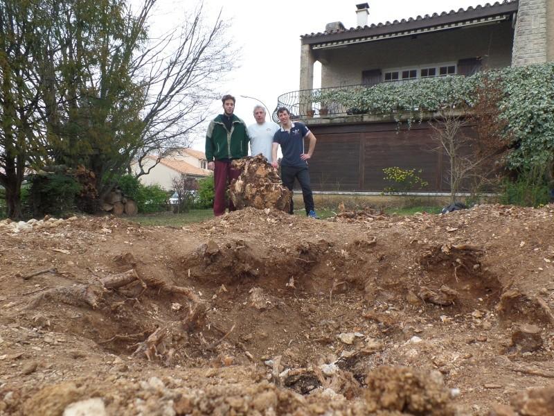 La family coupe des arbres Sam_7011