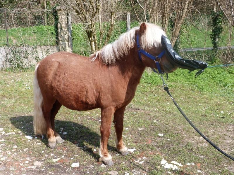 Poids cavalier poids poney + je suis nouvelle  P1210714
