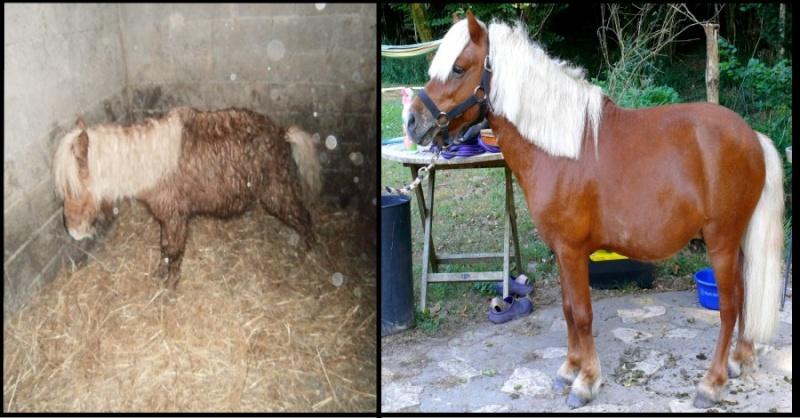 Poids cavalier poids poney + je suis nouvelle  Stello11