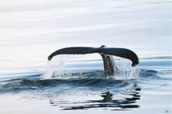 Le 8 juin, journée mondiale de l'océan  Journz10