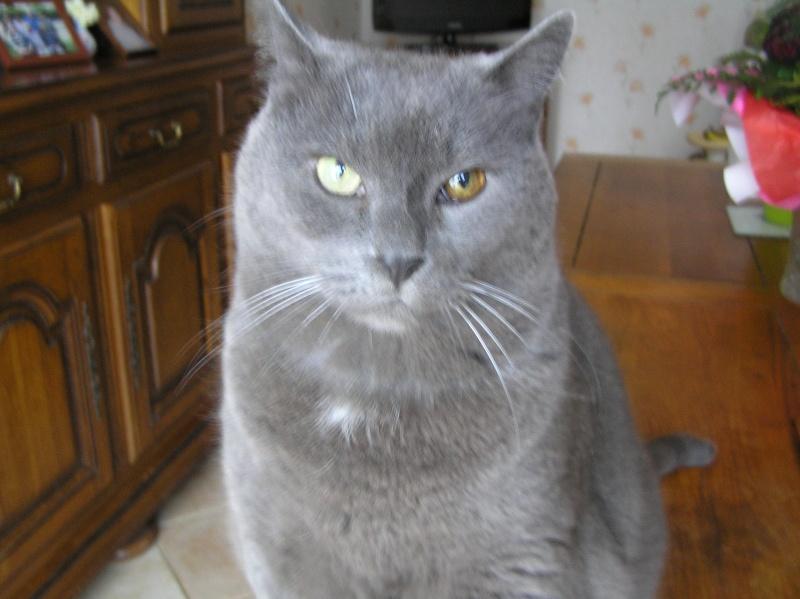 Des chats , encore des chats ^^ P1010111
