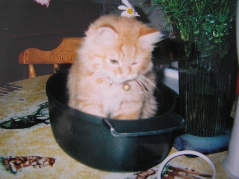 Des chats , encore des chats ^^ P1010210