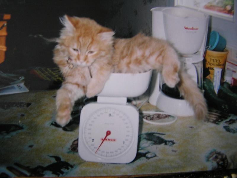 Des chats , encore des chats ^^ P1010211