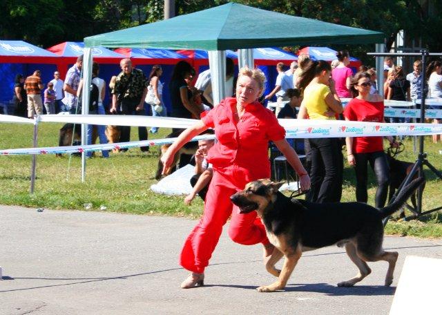 Монопородная  выставка  Вео в  Харькове  27.08.2011г. 292f2a10
