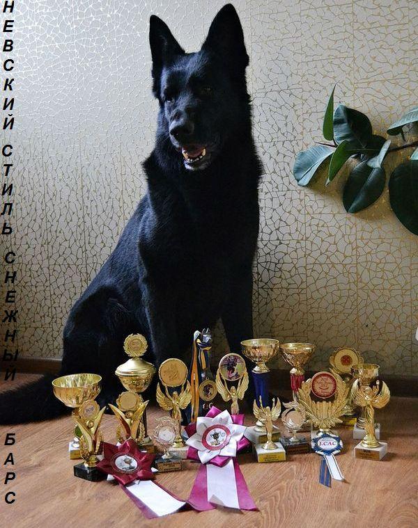НЕВСКИЙ СТИЛЬ СНЕЖНЫЙ БАРС (Харьков) Dsc_3816