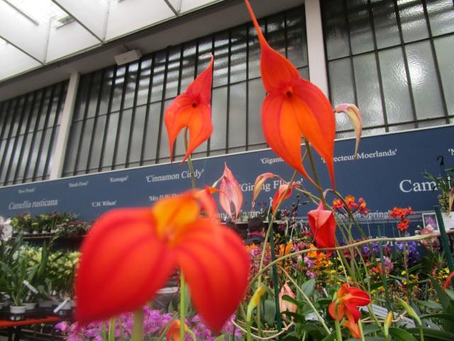Orchideenausstellung in Frankfurt im Palmengarten 2016 Img_0100