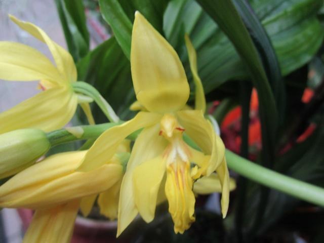 Orchideenausstellung in Frankfurt im Palmengarten 2016 Img_0251