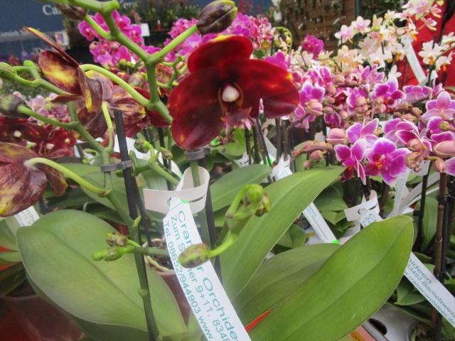 Orchideenausstellung in Frankfurt im Palmengarten 2016 Img_0295