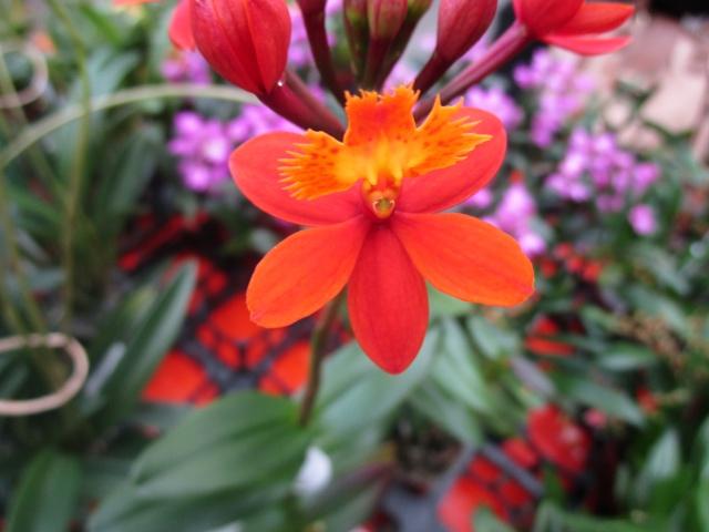 Orchideenausstellung in Frankfurt im Palmengarten 2016 Img_0312