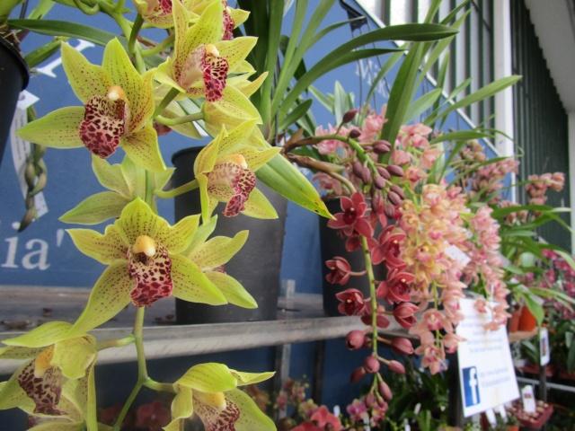 Orchideenausstellung in Frankfurt im Palmengarten 2016 Img_0316