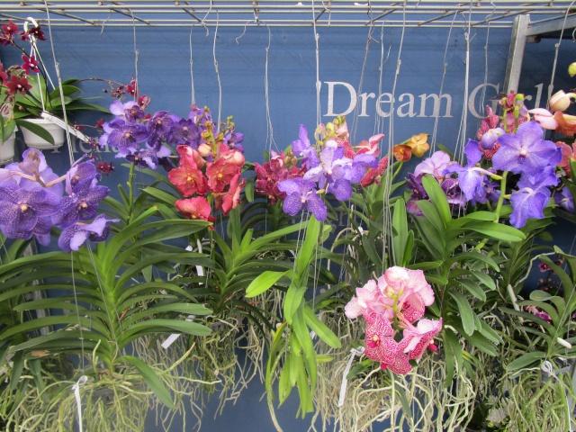 Orchideenausstellung in Frankfurt im Palmengarten 2016 Img_0323