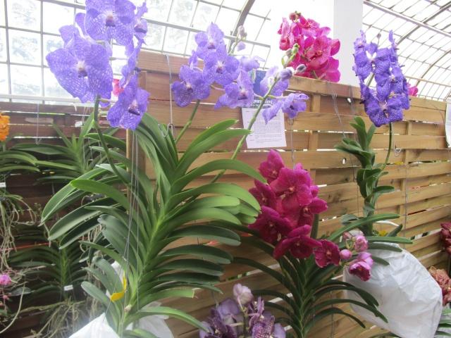Orchideenausstellung in Frankfurt im Palmengarten 2016 Img_0328