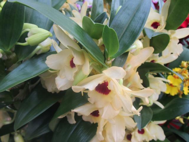 Orchideenausstellung in Frankfurt im Palmengarten 2016 Img_0334