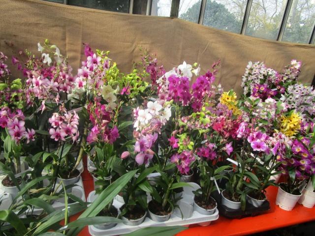 Orchideenausstellung in Frankfurt im Palmengarten 2016 Img_0349