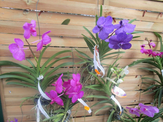 Orchideenausstellung in Frankfurt im Palmengarten 2016 Img_0352