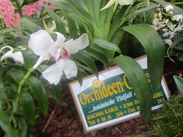 Orchideenausstellung in Frankfurt im Palmengarten 2016 Img_0365