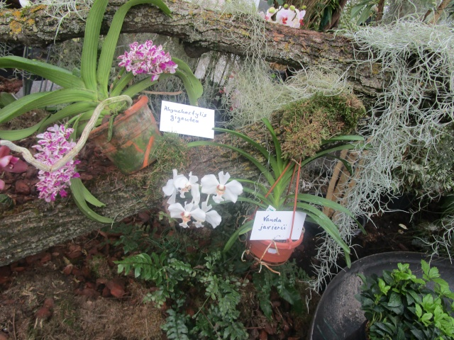 Orchideenausstellung in Frankfurt im Palmengarten 2016 Img_0368