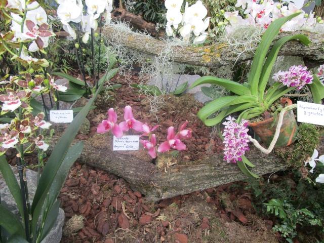 Orchideenausstellung in Frankfurt im Palmengarten 2016 Img_0369