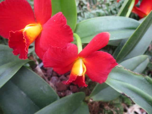 Orchideenausstellung in Frankfurt im Palmengarten 2016 Img_0370