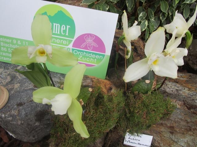 Orchideenausstellung in Frankfurt im Palmengarten 2016 Img_0375
