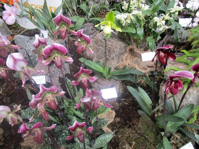 Orchideenausstellung in Frankfurt im Palmengarten 2016 Img_0378